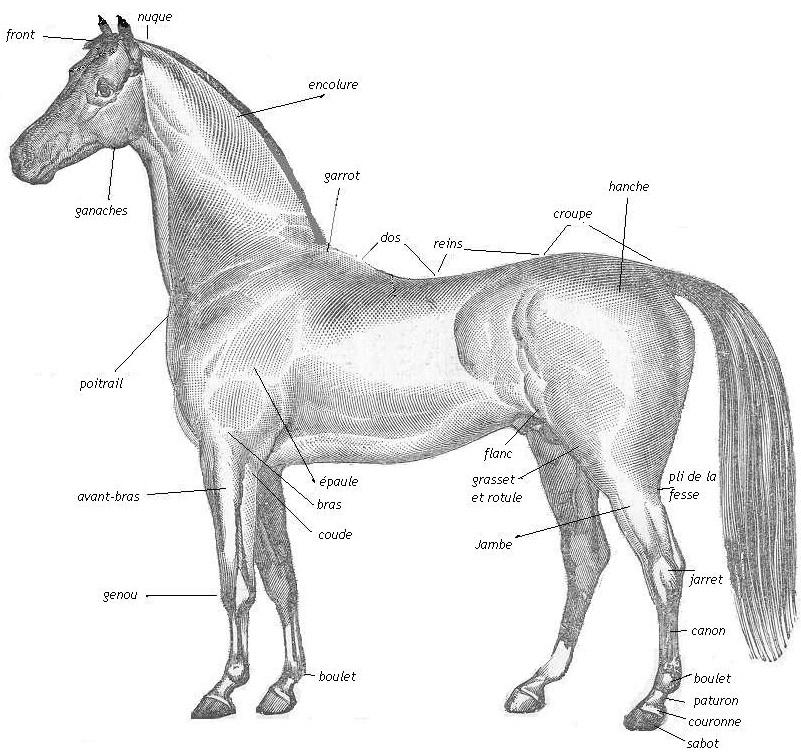 5 vendémiaire - jour du cheval