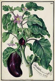 26 vendémiaire - aubergine